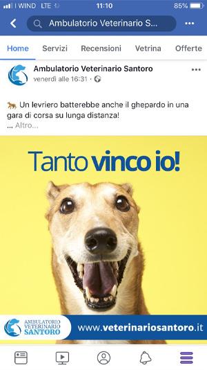 AerisLabs Gestione Social Media per Ambulatorio Veterinario Santoro